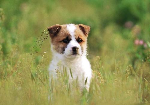 狗狗钻草丛的频率不要太高